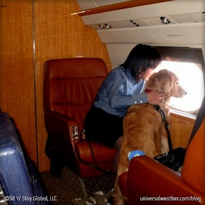Leveraging a Charter Operation's Untapped Clients: Pets – Part II